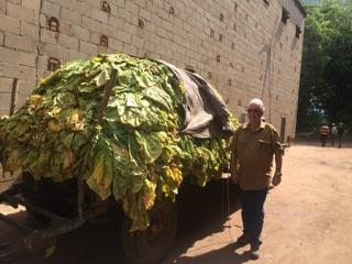 Jay King with Tobacco Harvest