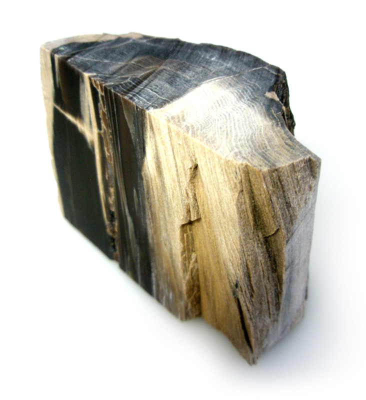 Petrified Wood - USA