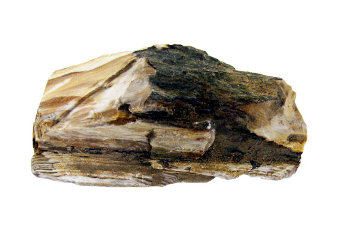 Queensland Petrified Wood